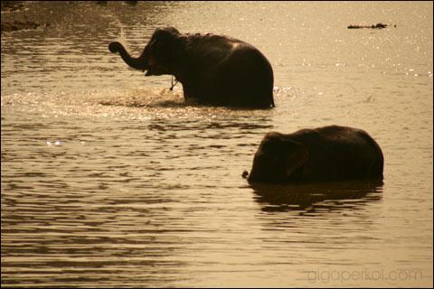 Giga-ElephantsIMG_7453